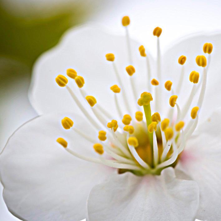 fiore che ha scoperto la vita