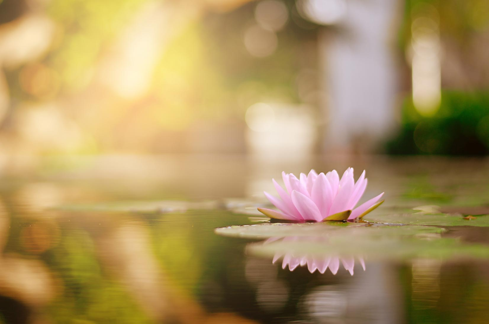 armoni ed equilibrio con fiore di loto